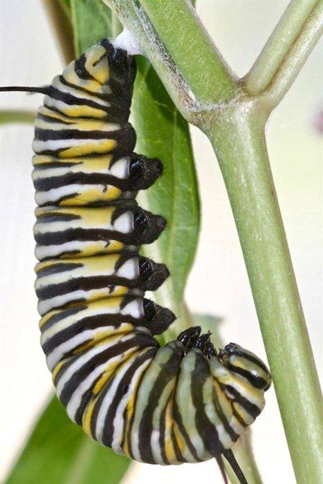 Kelebeğin doğuşunu gördünüz mü?