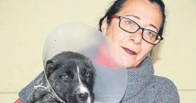 Gaziantepte bir aylık köpeğin kulağını kestiler 41