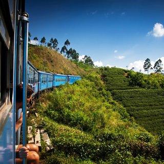 Çayın ülkesine yolculuk