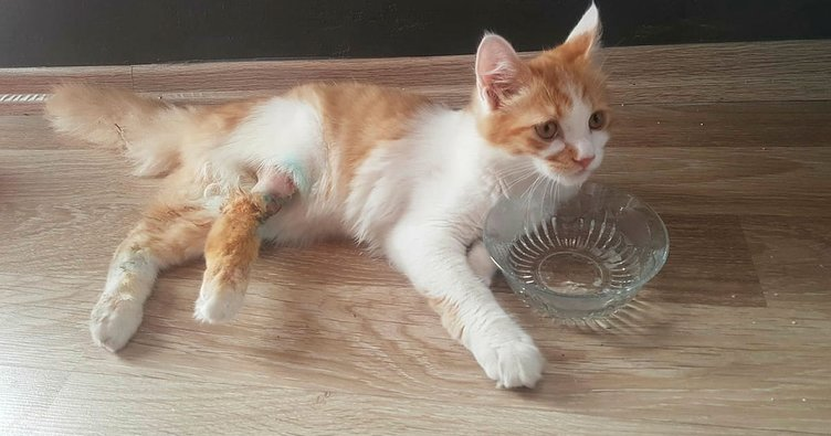 Yaralı yavru kedi, 15 dakikada tedavi edildi