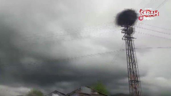 Ardahan'da leylek yuvasında çıkan yangını söndürmek için seferber oldular | Video