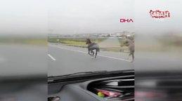 İstanbul'da karayolunda dörtnala koşan atla kamerada | Video