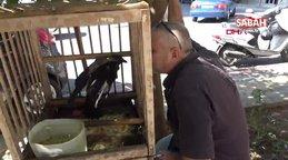 Antalya'da kedi gibi miyavlayan karga, görenleri şaşırtıyor | Video