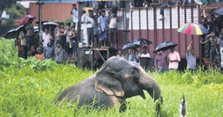 Fil 15 kişiyi öldürdü