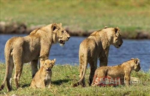 Vahşi doğanın fedakar anneleri
