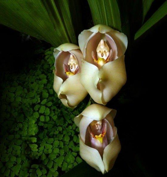 Farklı canlılara benzeyen ilginç çiçekler