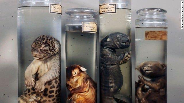 Dünyanın en korkutucu tıp müzeleri