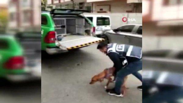Son dakika! İstanbul'da hayvanlara yönelik cinsel içerikli sapıkça fikirlerini paylaşan şahıs yakalandı | Video