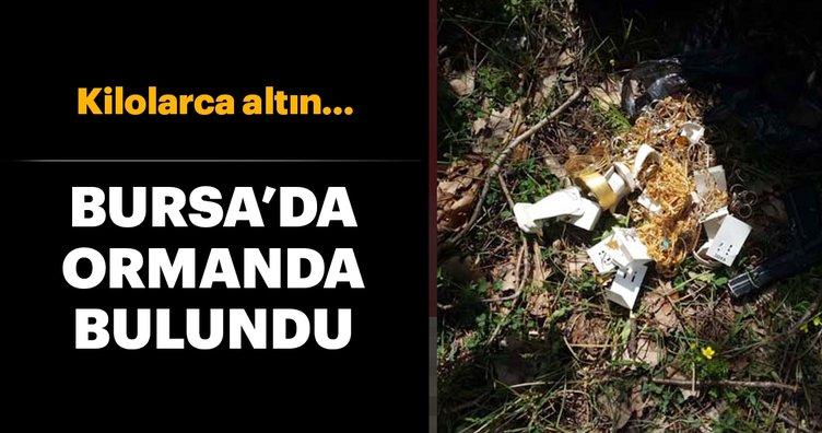 Bursa'da ormanda bulundu! Kilolarca altın...