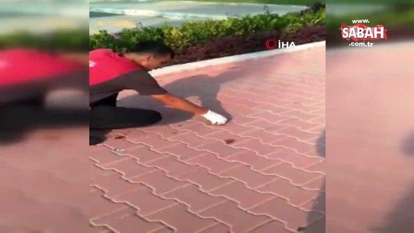 Ayağı sakıza yapışan kuşu böyle kurtardı