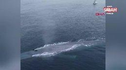 ABD'de okyanus kıyısında balıkçıları korkutan dev mavi balina kamerada | Video
