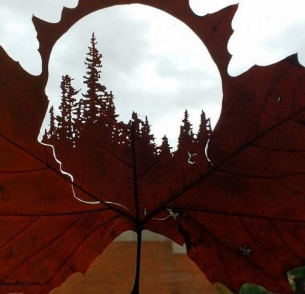 Sanat eserine dönüştürülen kuru yapraklar