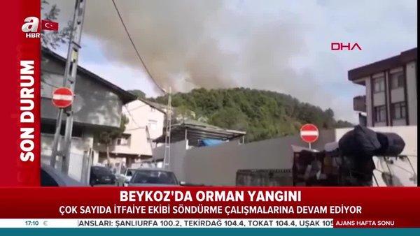 Son dakika: Beykoz'daki ormanlık alanda yangın çıktı! Yerleşim alanına yakın yangına müdahale ediliyor | Video