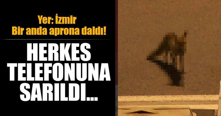 İzmir Adnan Menderes Havalimanı'nda aprona tilki girdi!