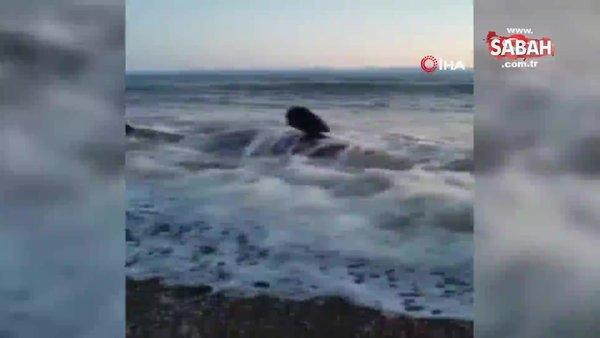 Kıyıya vuran balina saatler süren operasyonla kurtarıldı | Video