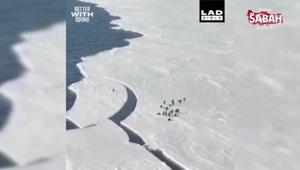 Kopan buz parçasında kalan penguen ailesine kavuşmak için saniyelerle yarıştı!