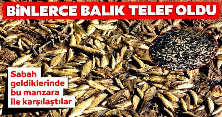 Antalya'da Cırnık Köprüsü'nün bulunduğu bölgede binlerce balık telef oldu!