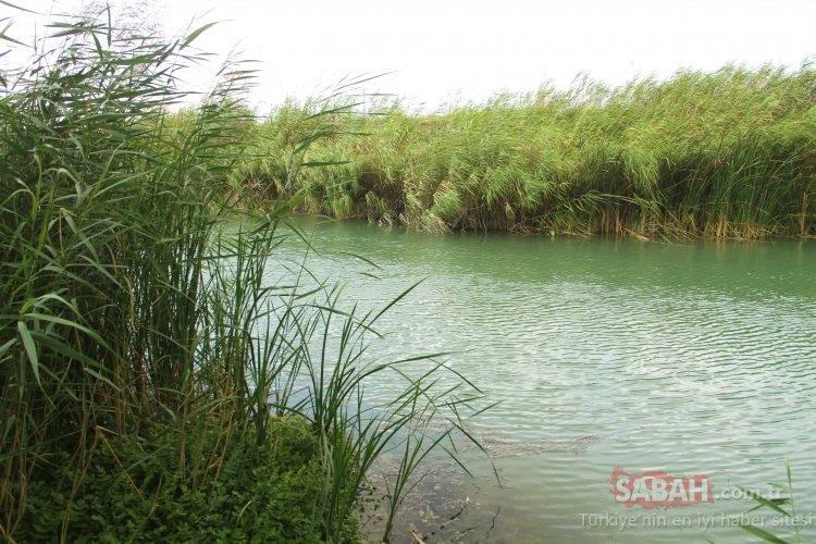 Türkiye'nin Amazon'u olarak biliniyor… Doğal güzellik havadan görüntülendi!