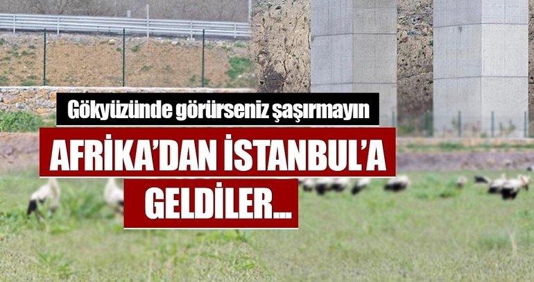 Leyleklerin İstanbul molası