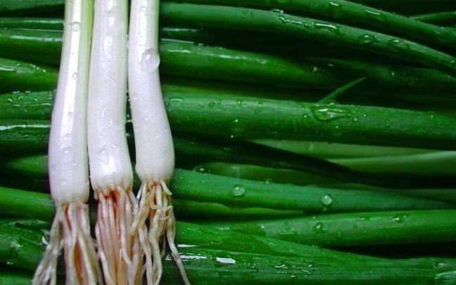 Taze soğan antibiyotikten daha etkili