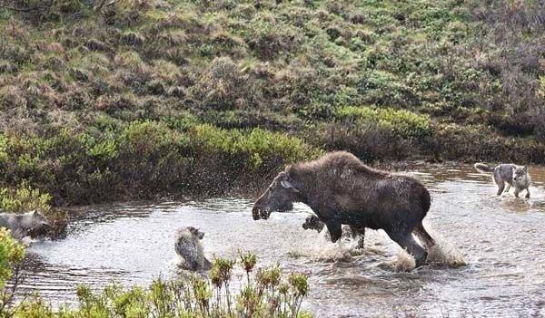Hayvanların vahşi dünyası