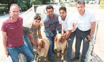 Genç çiftçilere damızlık
