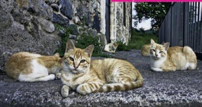 Sokak hayvanları için sergi