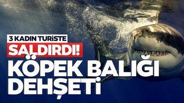 Korkunç son dakika haberi: Köpek balığı dalış yapan 3 kadına saldırdı! Dehşet anları kameralara böyle yansıdı