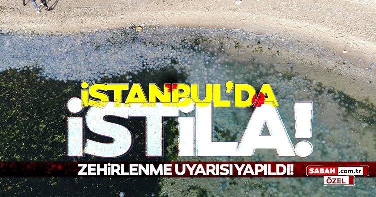 Son Dakika Haberleri - İstanbul'da denizanası istilası! Zehirlenme uyarısı