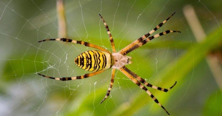 Rüyada örümcek görmek ile ilgili rüya tabirleri! Rüyada büyük örümcek ve örümcek ağı görmek neye işarettir?