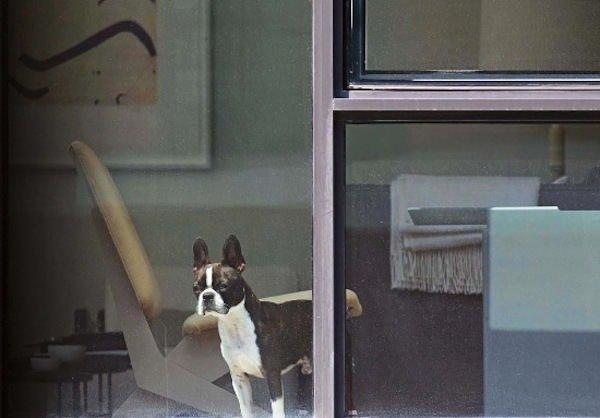Komşularını gizlice görüntüledi