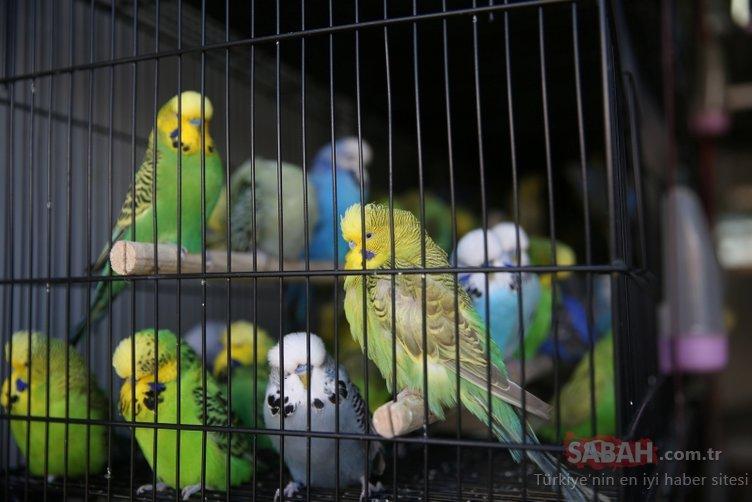 Bölgenin en büyüğü! Rengarenk kafes kuşları görücüye çıktı