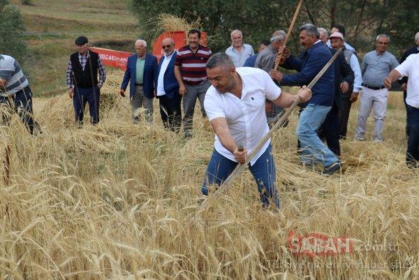 2 bin yıllık ata tohumu! O ilimizde hasat gerçekleşti...