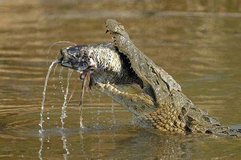 Dünyanın en ölümcül hayvanları