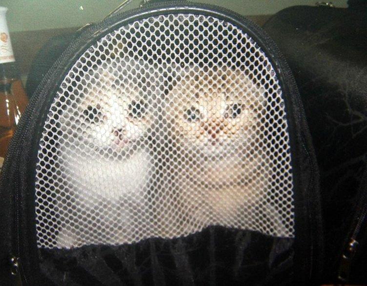 Gümrükten ihale ile kedi satışı