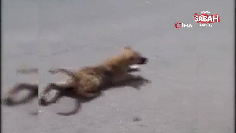 Sakat taklidi yapan köpek görenleri şaşırttı