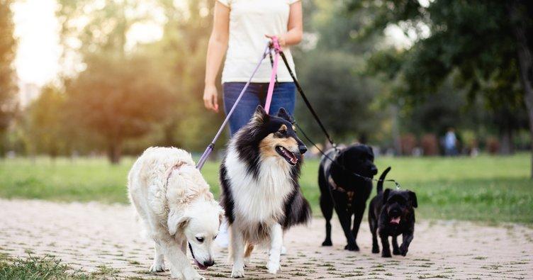 Köpek cinsleri nelerdir? Küçük, büyük, cins ve süs köpeği cinsleri ve özellikleri!