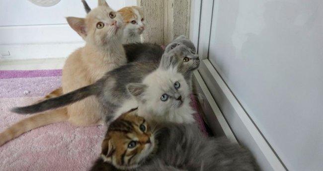 Sınırda yakalanan kedilere ikinci ihalede de alıcı çıkmadı