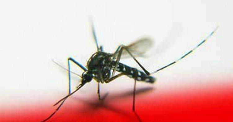 Sıtma belirtileri nelerdir? Sıtma nasıl bulaşır, korunma yolları nelerdir?