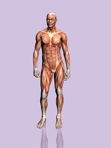 Organlar ne kadar sürede kendini yeniliyor