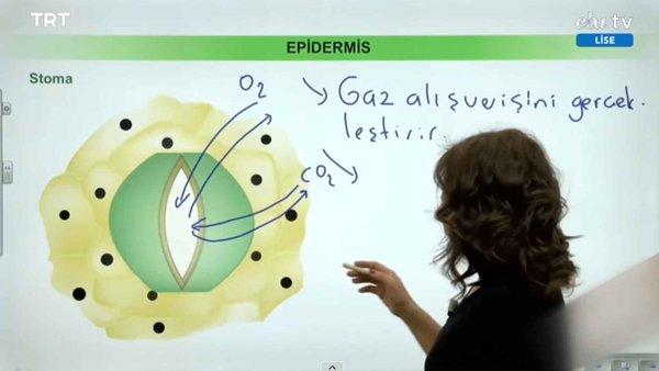 EBA TV - 12. Sınıf Biyoloji Konu, Bitkisel Dokular
