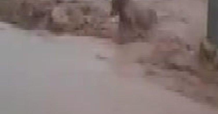 Sele kapılan 4 büyükbaş hayvan telef oldu