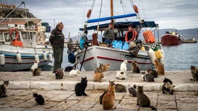 Yunanistan'da hayvanlar aç, sokaklar cins kedi dolu