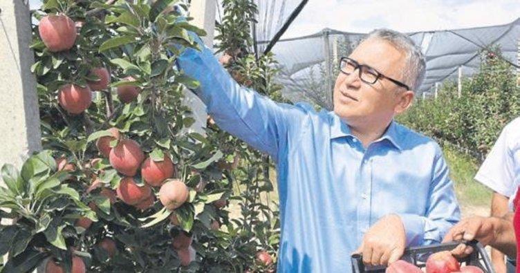Vali Yılmaz elma hasadına katıldı