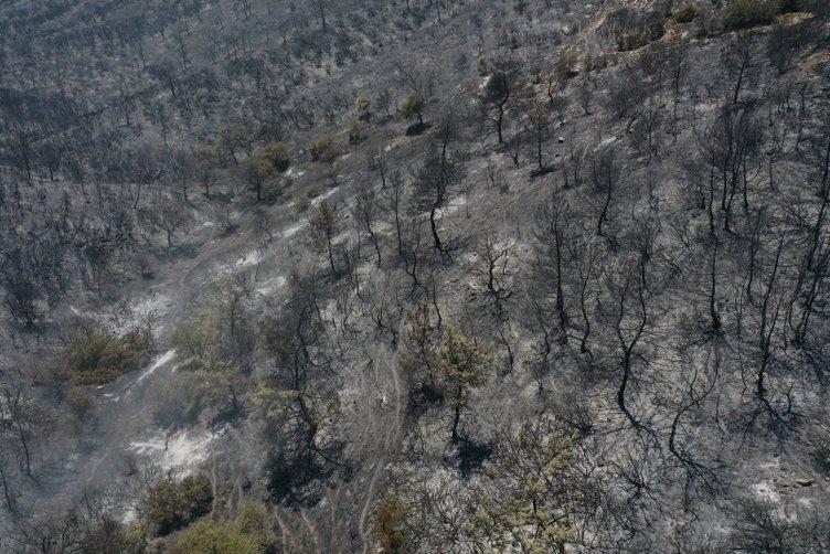 Son dakika! İzmir'de çıkan yangın sonrası yürekleri yakan fotoğraflar ortaya çıktı!