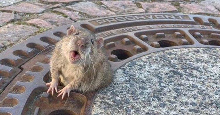 RÜYADA FARE GÖRMEK - Rüyada farenin ısırdığını görmek, fare kovalamak ve yakalamaya çalışmak ile ilgili rüya tabirleri