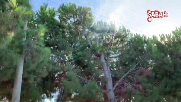 Kuşadası'nda inanılmaz olay... Kozalak toplayan genç çam ağacının tepesinde yanarak öldü | Video