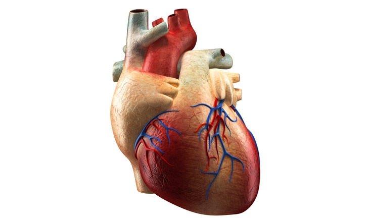 Hangi organ ne zaman yaşlanmaya başlıyor