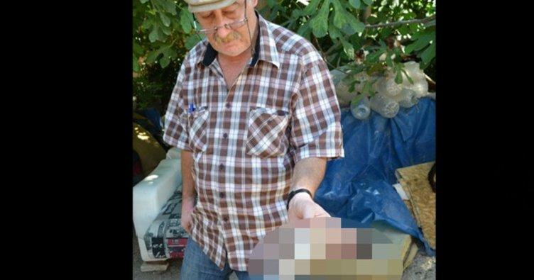 İzmir'de yavru kedinin boğazını kesip çöpe attılar