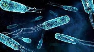 Bakteriler hakkında 25 ilginç gerçek